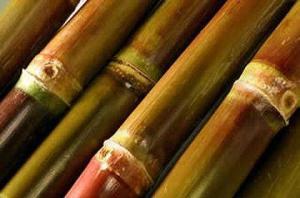 Vem da cana-de-açúcar um dos ingredientes mais usados pelos dermatologistas.